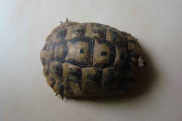 tortues de laetitia7 Dsc01023