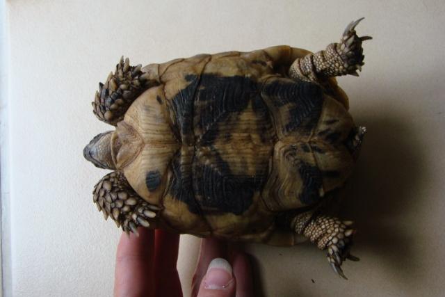 tortues de laetitia7 Dsc01024