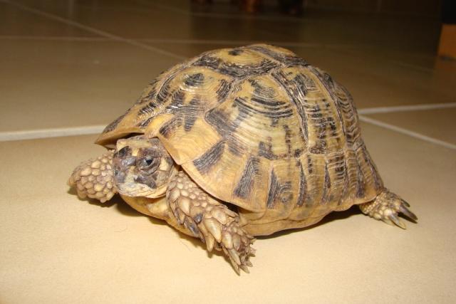 tortues de laetitia7 Dsc01026