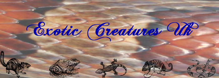 Exotic Creatures UK