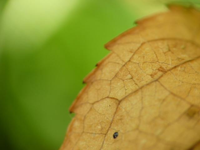 Nature diverse et variée P1030010
