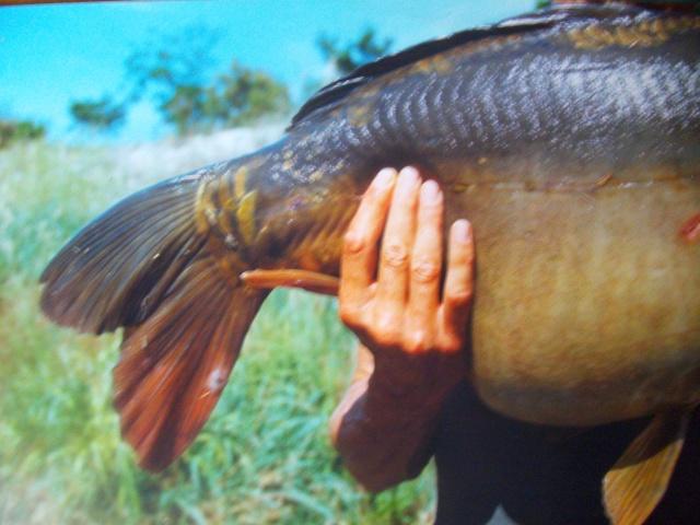 Pêche sur l'hérault Imgp2610