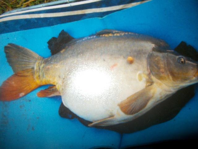 Pêche sur l'hérault Imgp2620