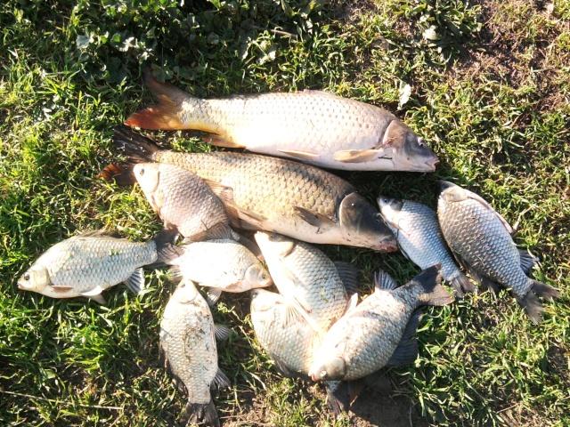 Pêche sur l'hérault Photo027