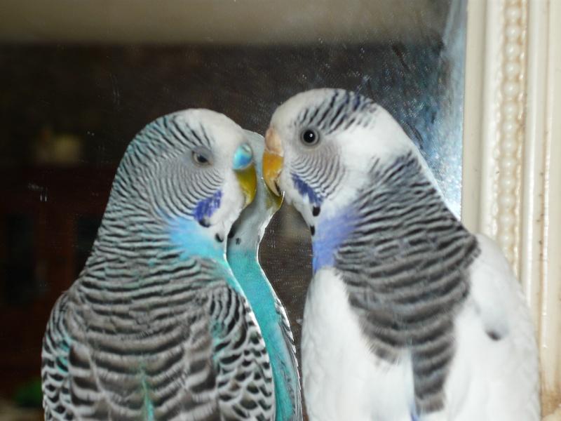 comète and blue P1000614