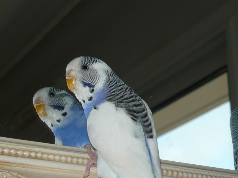 comète and blue P1000619