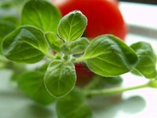 Plantes aromatiques, graines, noix, légumes, poissons, épices ... dans la Cuisine Marocaine 34107410