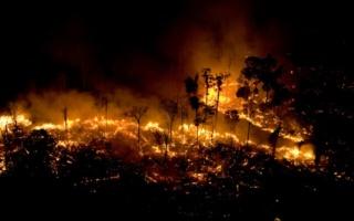 Pendant ce temps-là en Amazonie...Alors que de terribles incendies ravagent des hectares de forêt