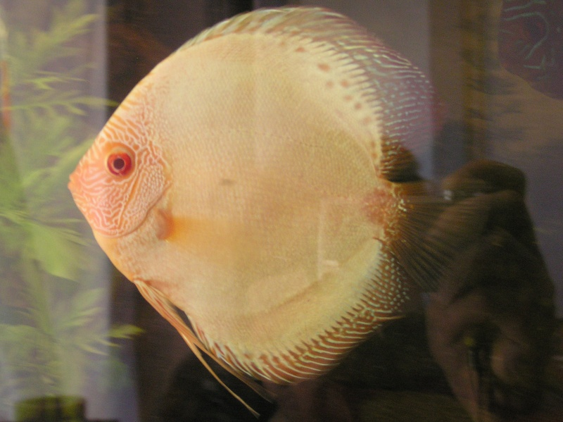 reproduction albinos P4150010