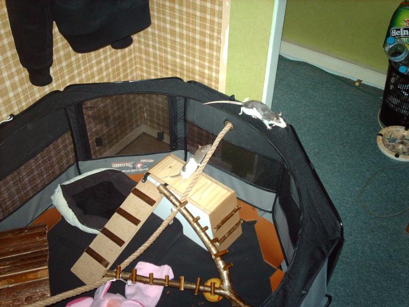 Enclos en nylon reconverti en aire de jeu ( photos ) - Page 3 Imag0825