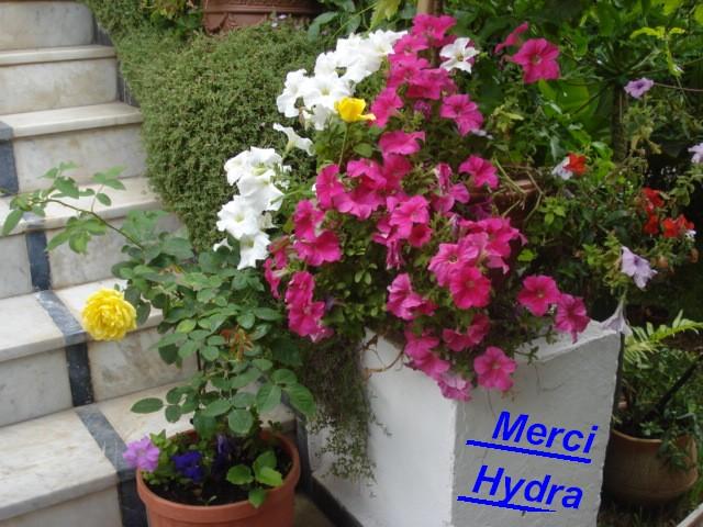 souvenirs de Haute-Marne Merci_12