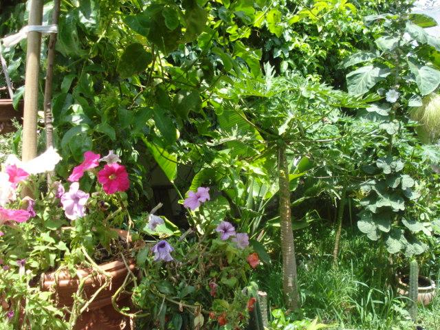 Jardin de Ryan :Issor dept 64 - Page 4 Photo_18