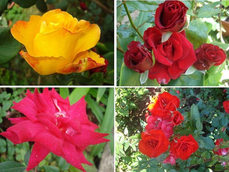 Jardin de Ryan :Issor dept 64 - Page 4 Ro_bmp10