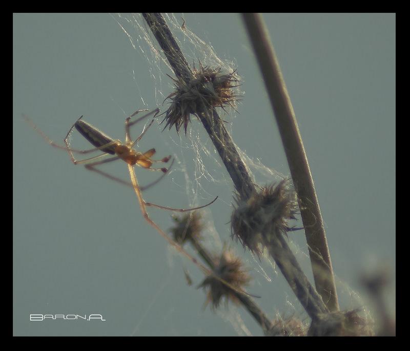 araignée du soir Mon_im16