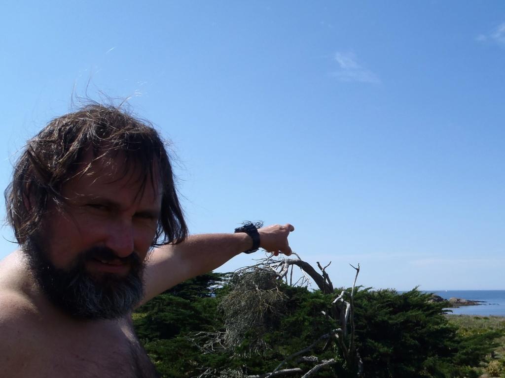 petite plante a ile dumet [Heliotropium europaeum] P1010313