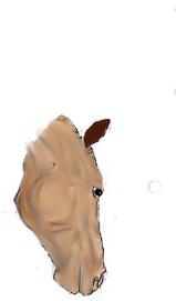 colo à plusieurs cheval de sport - Page 2 Colabo10