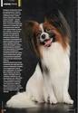 "Журнал ""Друг"" Май 2011, №5 Папийон королевский компаньон Nddddn13"