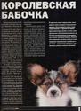"Журнал ""Друг"" Май 2011, №5 Папийон королевский компаньон Nddddn14"