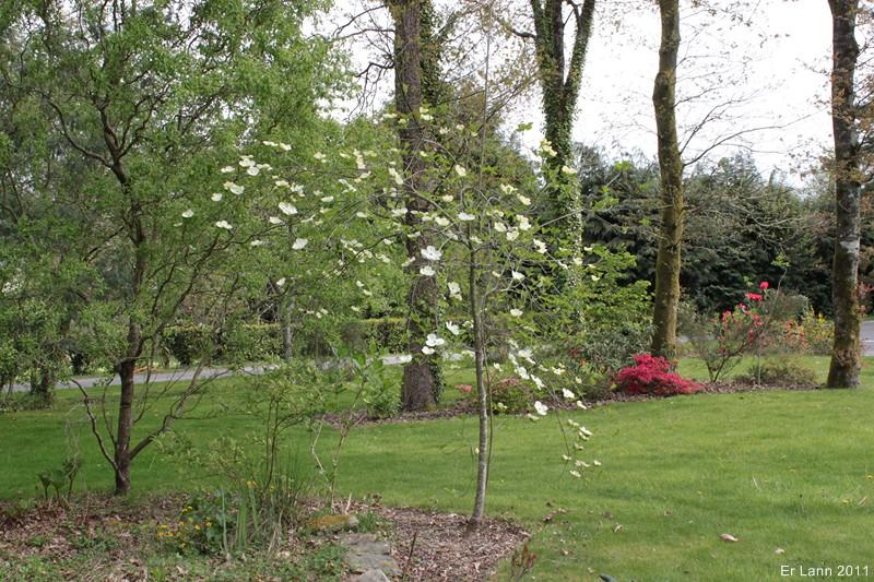 floraisons des arbres et des arbustes - Page 3 Img_3821