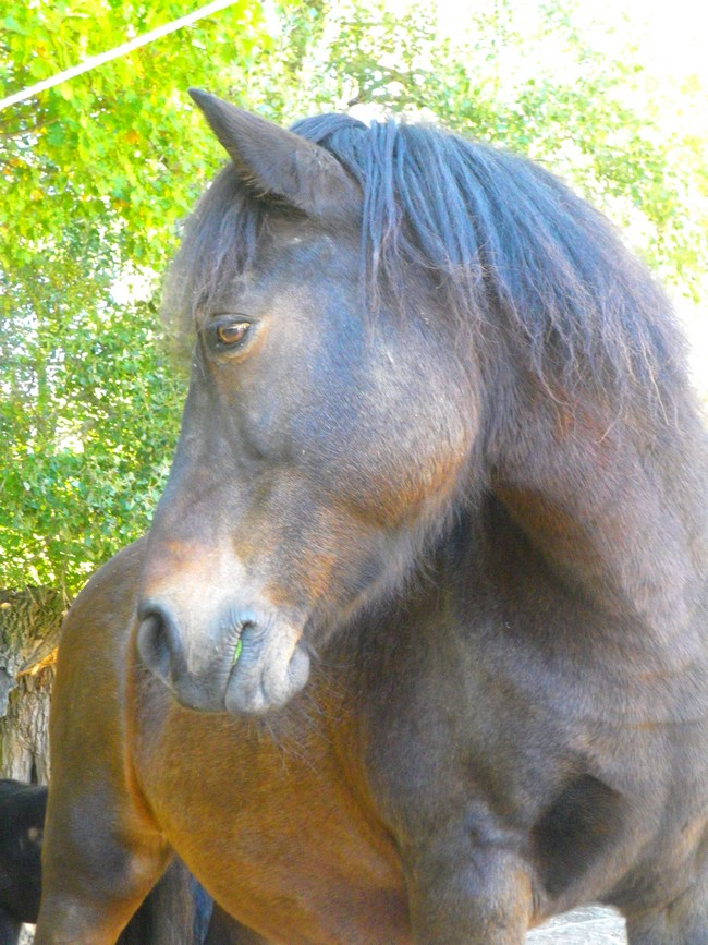 Equus , by Kiwi. Copie_10