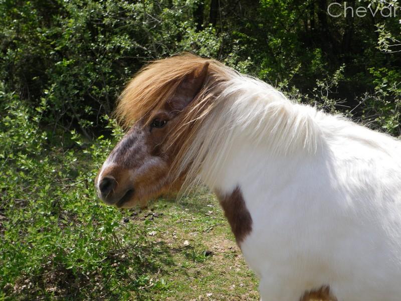 Equus , by Kiwi. Copie_12