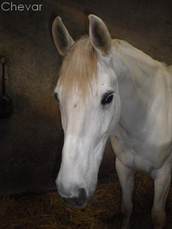 Equus , by Kiwi. Copie_13
