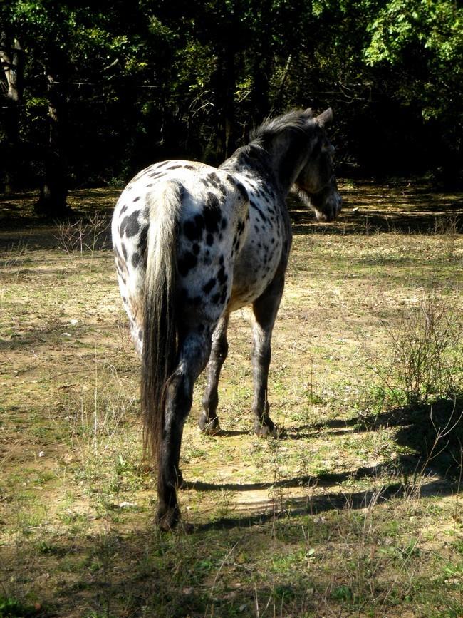 Equus , by Kiwi. Imgp1310