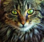 Warrior Cats Rpg - Portal 63-2510