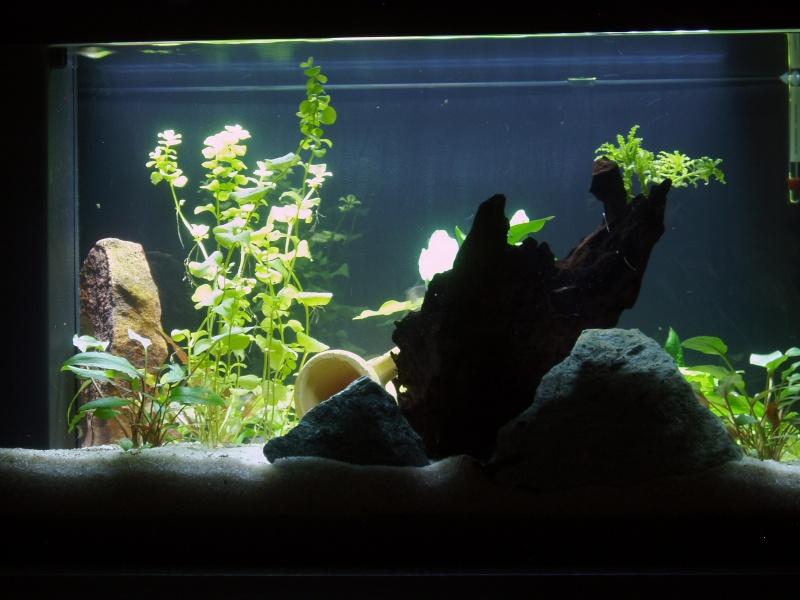 présentation de mon aquarium Face_a10
