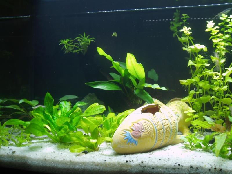 présentation de mon aquarium Vue_de10