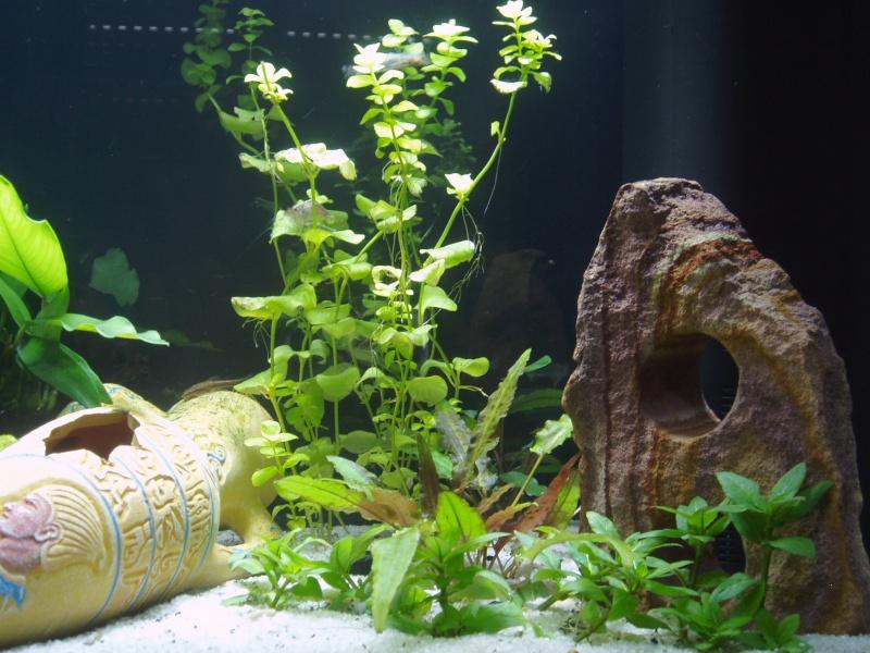 présentation de mon aquarium Vue_de11