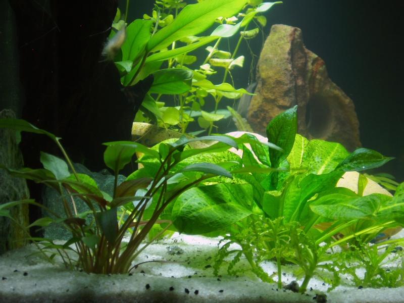présentation de mon aquarium Vue_de13