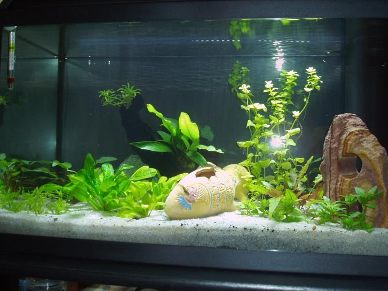 présentation de mon aquarium Vue_fa10