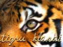 Mėnulio Jūreivė - Portal Tiger_11