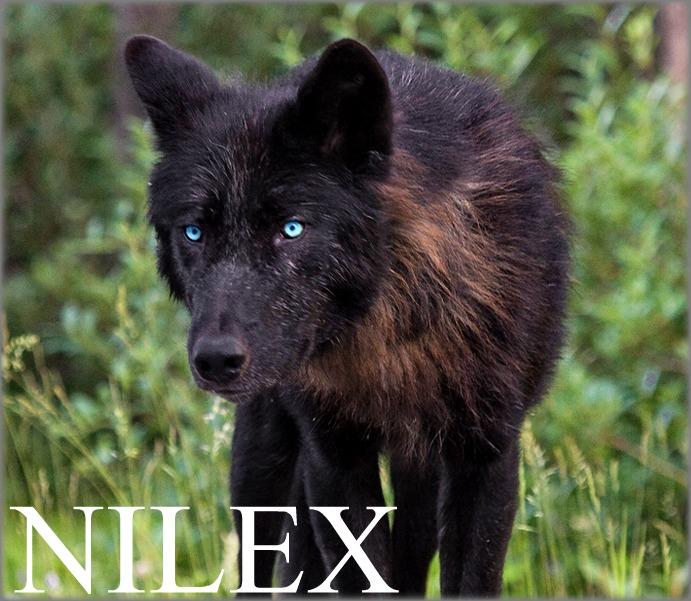 T'Kai's Bio {W.I.P} Nilex10
