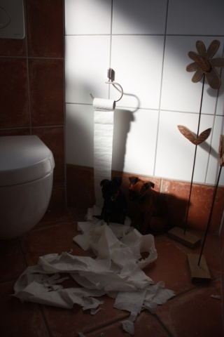 greeting from Germany - Page 4 Toilet11