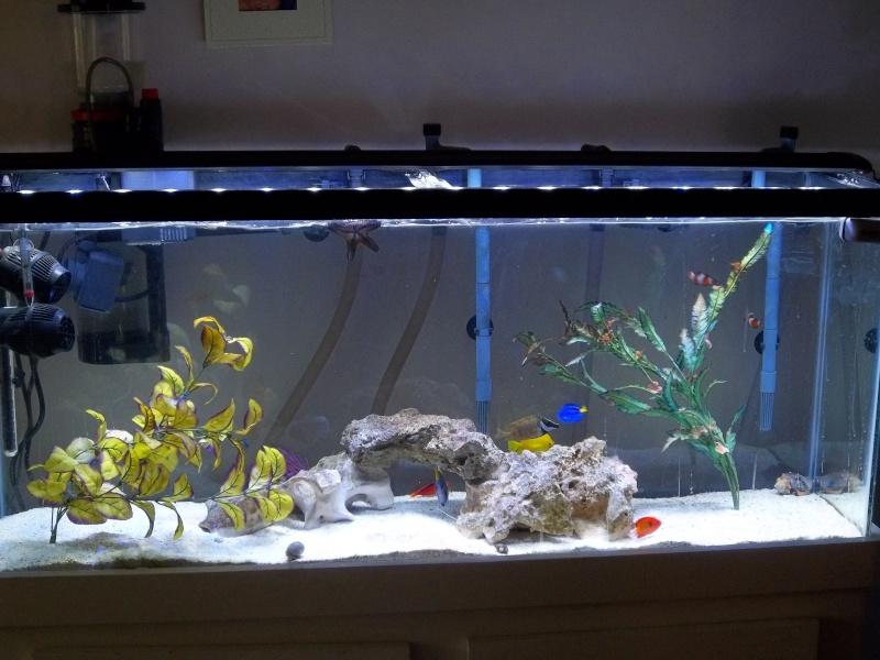 My Saltwater tanks 100_0010