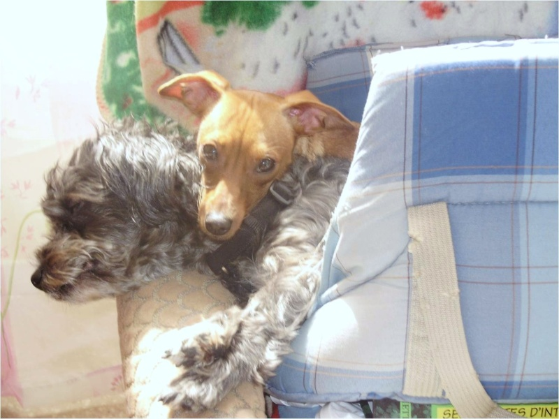 mes chiens Mes_do12