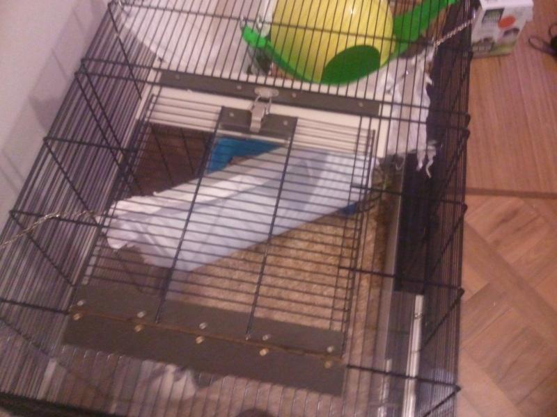 Photos de vos cages - Page 5 Photo016
