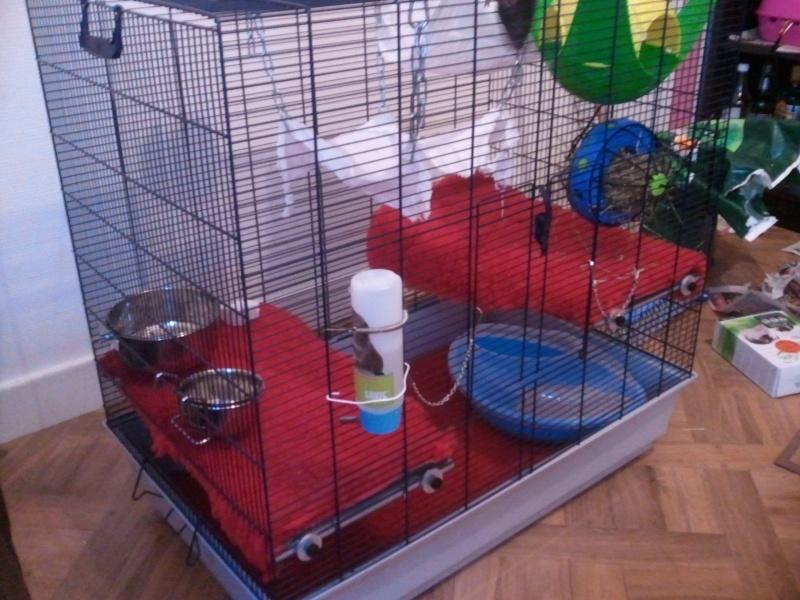 Photos de vos cages - Page 5 Photo024
