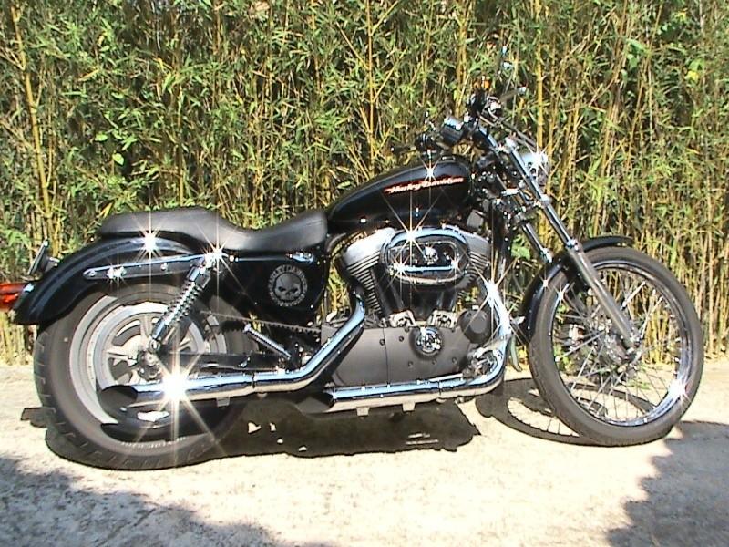 En 883... combien sommes nous sur le Forum Passion-Harley - Page 6 Dsc01013