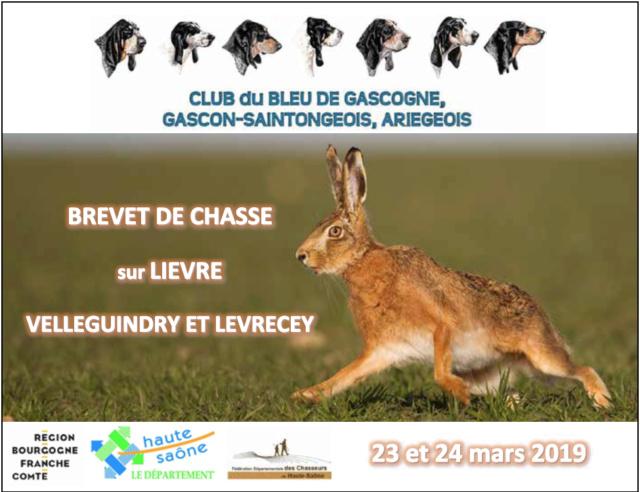 Brevet de chasse lièvre - Haute Saône Captur13