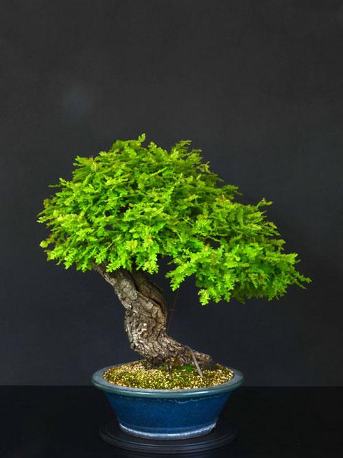 Quercus cerris - Pagina 8 16--re10