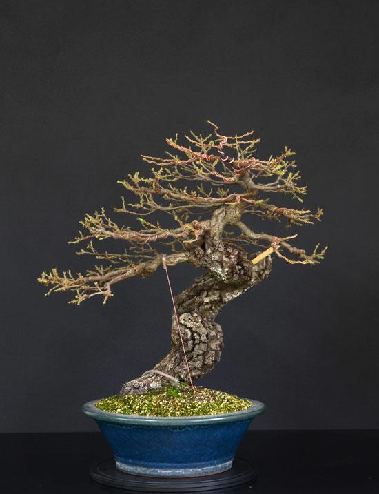 Quercus cerris - Pagina 9 26--fr10