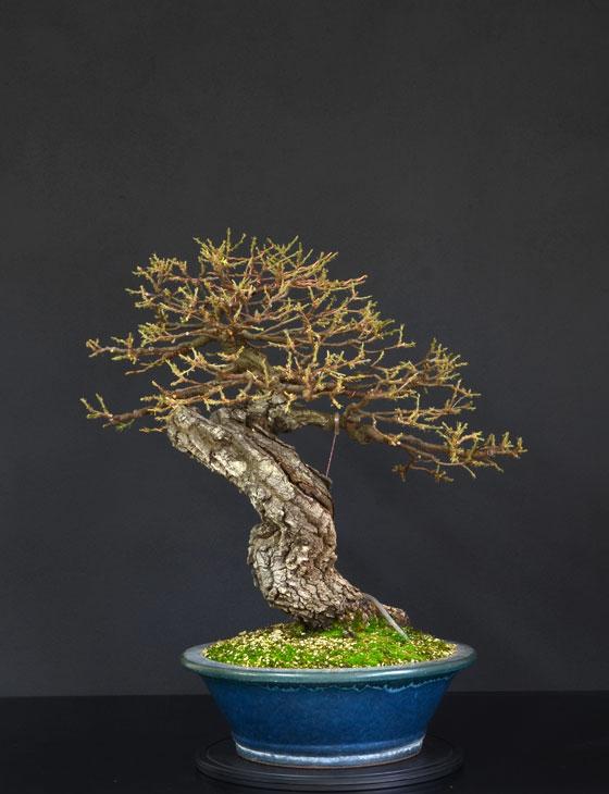 Quercus cerris - Pagina 9 28--re10