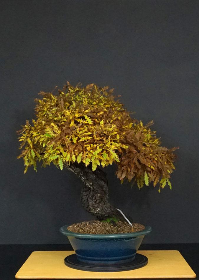Quercus cerris - Pagina 10 37--re10