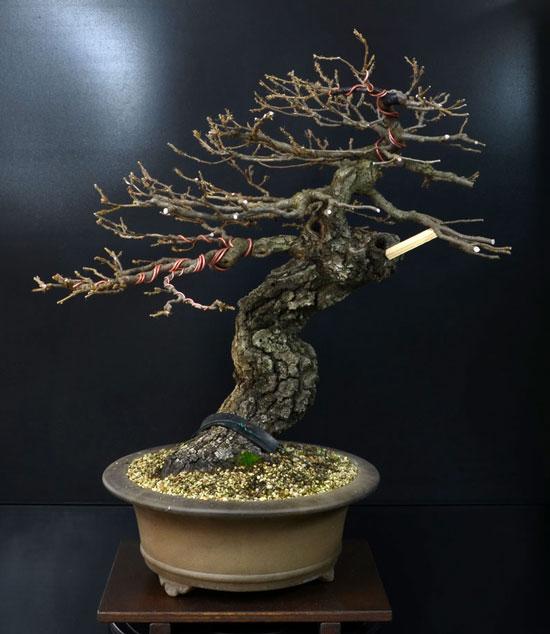 Quercus cerris - Pagina 8 6--fro10