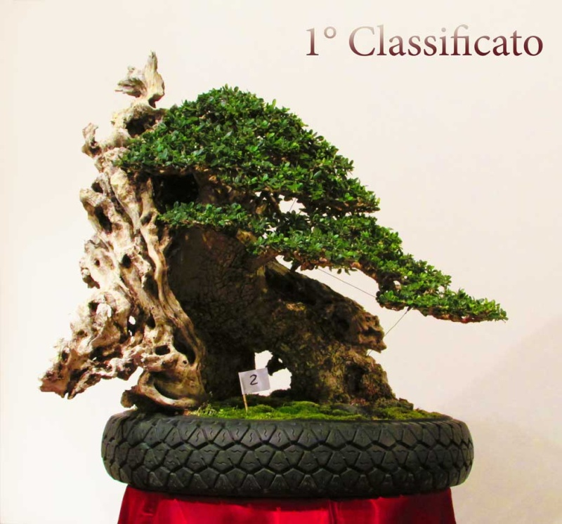 Vasi per bonsai Img_1110