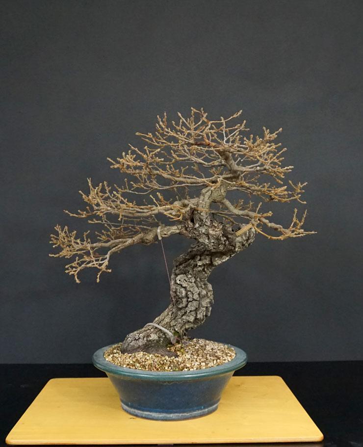 Quercus cerris - Pagina 10 Post-d10