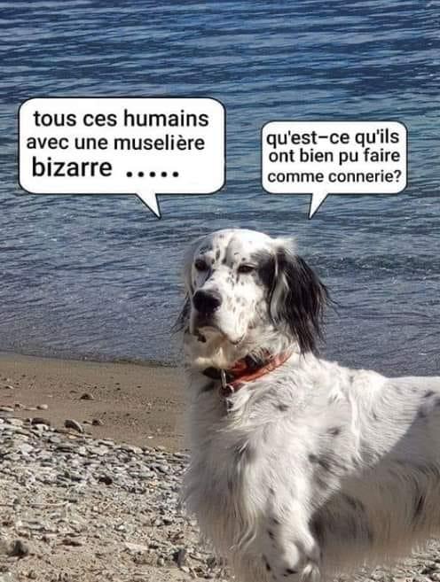 Humour en images - Page 6 H6nwbt10